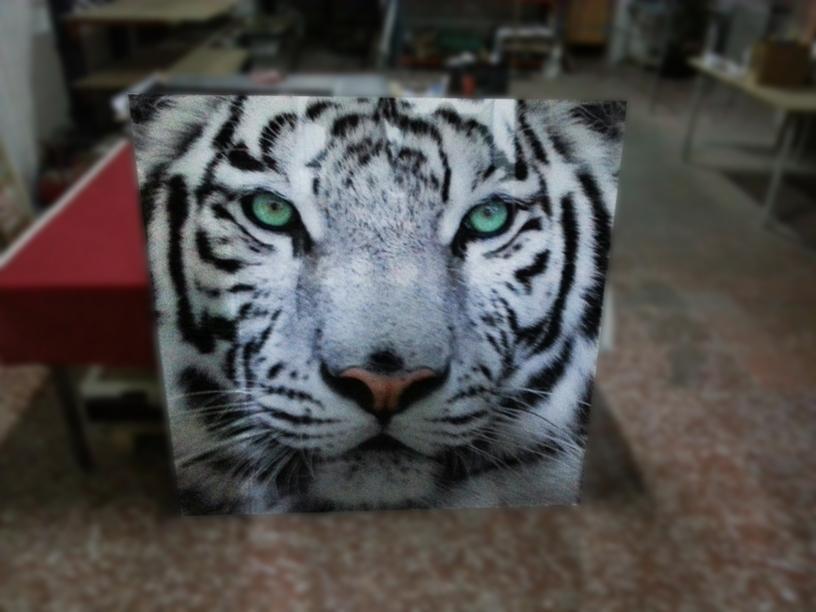 Stilpictures cuadro de metacrilato tigre de bengala for Cuadros de metacrilato