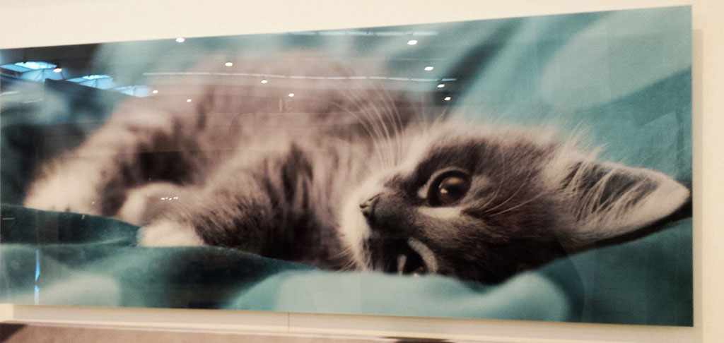 Stilpictures cuadro de metacrilato de gato stilpictures for Cuadros de metacrilato